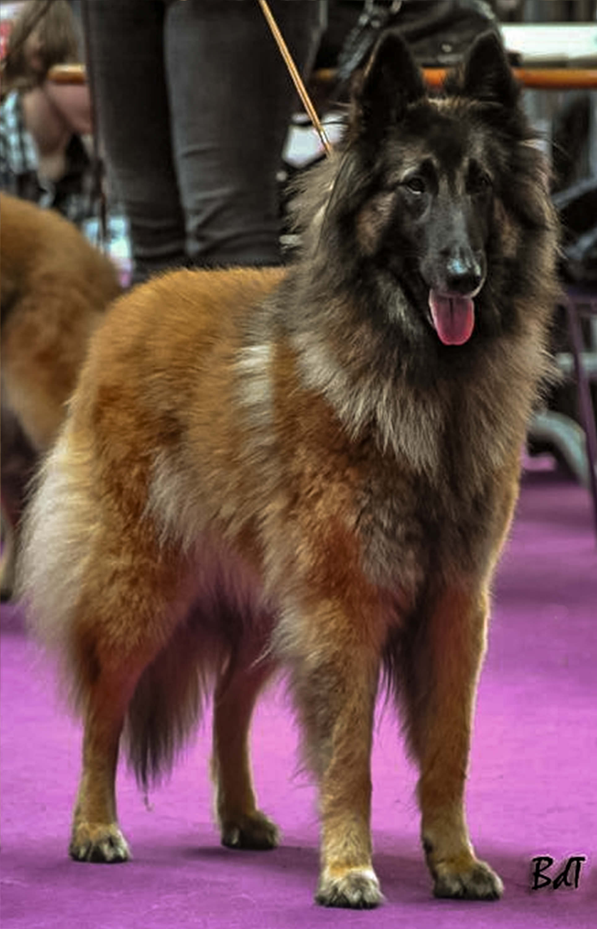 Jaina's mom - France's Champion - Digit des Canis du Brabant