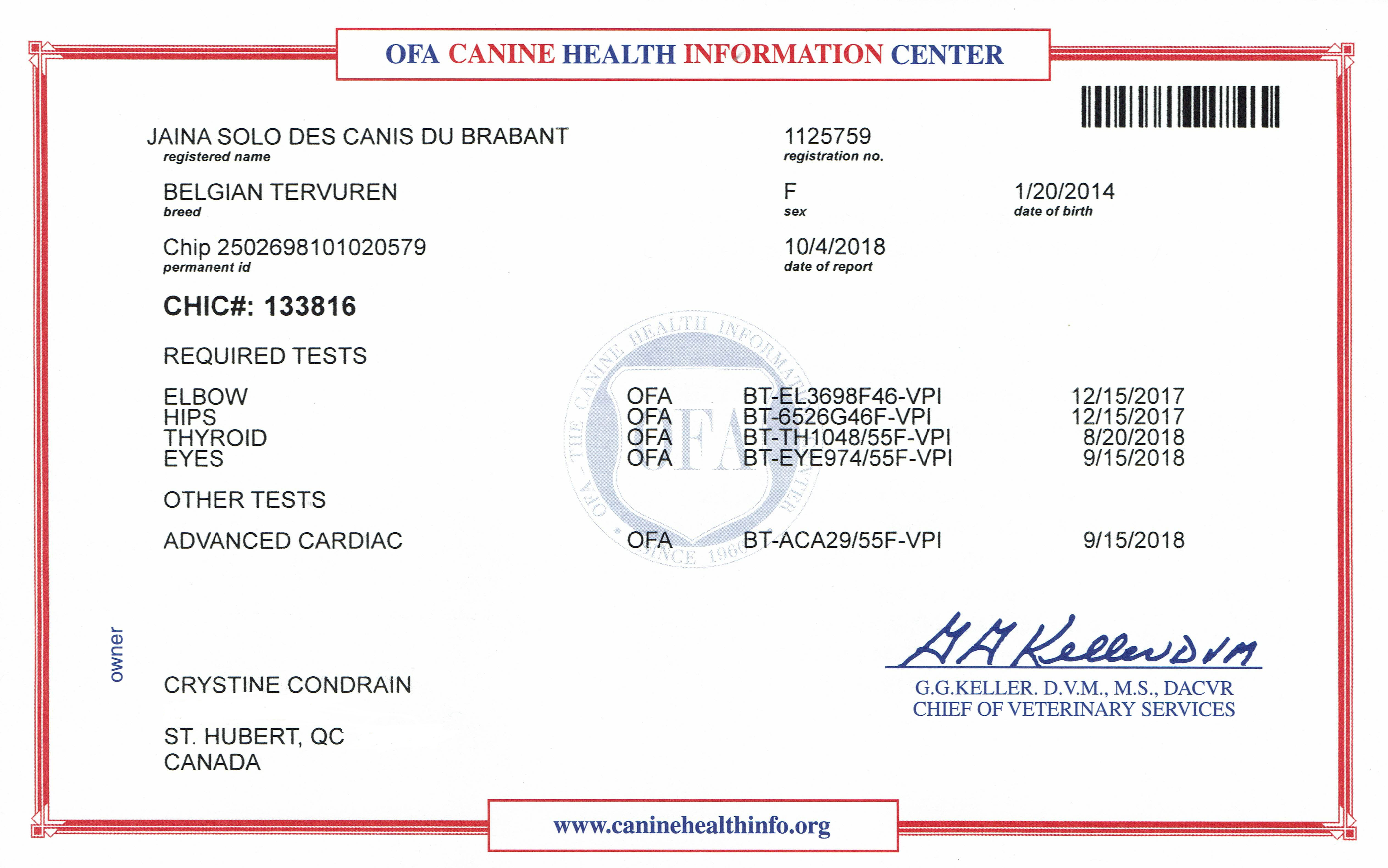 Certificat CHIC (Canine Health Information Center) #133816.